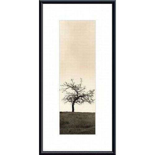 'Cherry Blossom Tree' by Alan Blaustein Framed Photographic Print