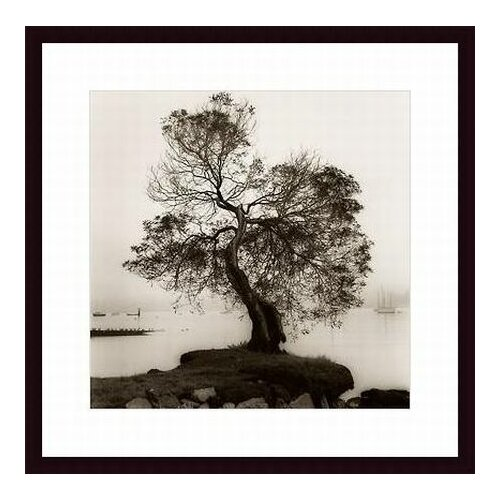 Barewalls 'Coast Oak Tree' by Alan Blaustein Framed Photographic Print