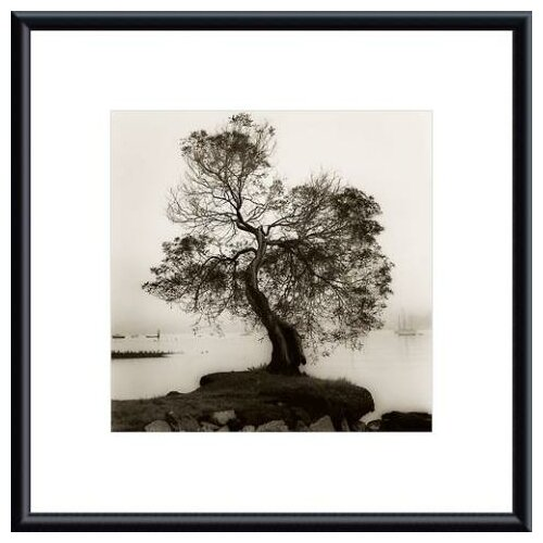 'Coast Oak Tree' by Alan Blaustein Framed Photographic Print