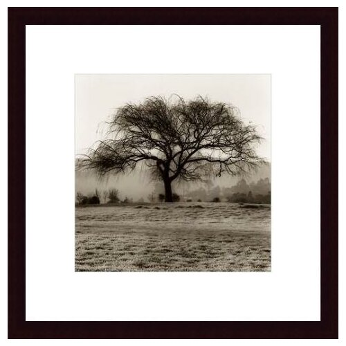 Barewalls 'Willow Tree' by Alan Blaustein Framed Photographic Print