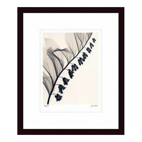 Barewalls 'Solomon's Seal' by Judith McMillan Framed Photographic Print