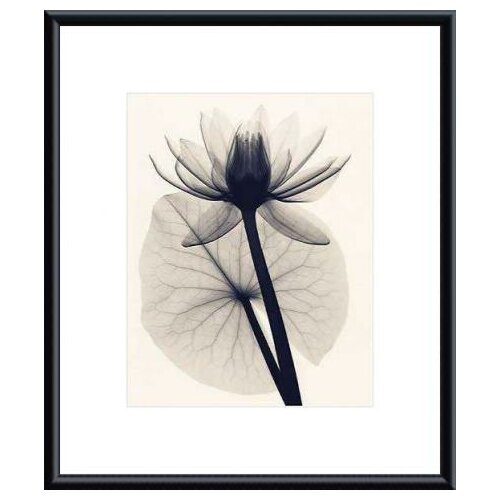 Barewalls 'Tropical Water Lily' by Judith McMillan Framed Photographic Print