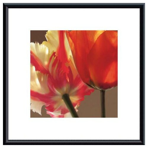 Barewalls 'Soiree IV' by S. Rose Framed Photographic Print