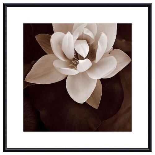 Barewalls Amazon Lotus by Rebecca Swanson Framed Photographic Print