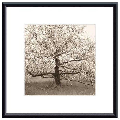 Barewalls Apple Tree in Bloom by Christine Triebert Framed Photographic Print