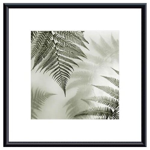 Barewalls Ferns No. 1 by Judith McMillan Framed Photographic Print