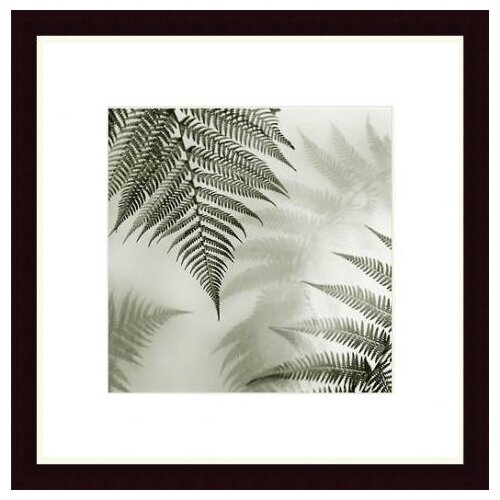 Barewalls Ferns No. 1 by Alan Blaustein Framed Photographic Print