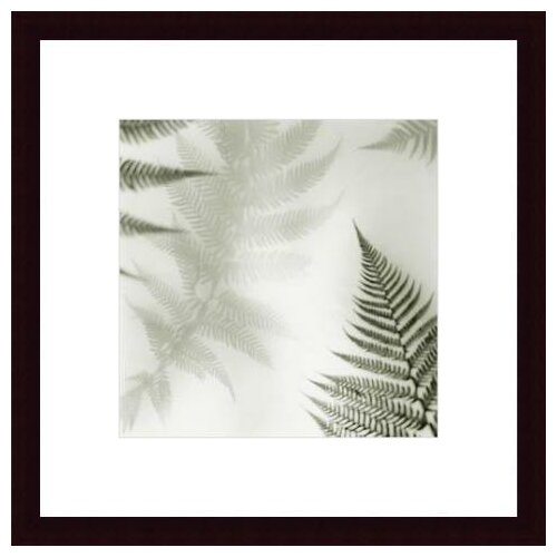Barewalls Ferns No. 2 by Alan Blaustein Framed Photographic Print