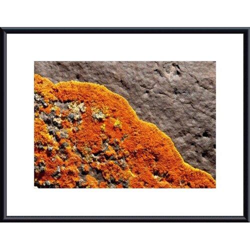 Barewalls Lichen Abstract by John K. Nakata Framed Photographic Print