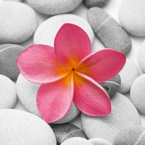 Platin Art Deco Glass Beautiful Pink Flower Photographic Print