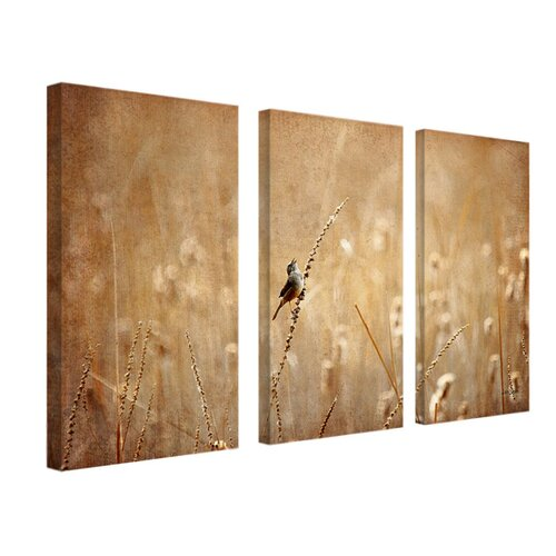 Bird by Lois Bryan 3 Piece Photographic Print on Canvas Set