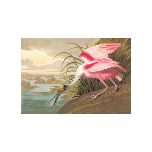 Buyenlarge Roseate Spoonbill by John James Audubon Graphic Art on Canvas