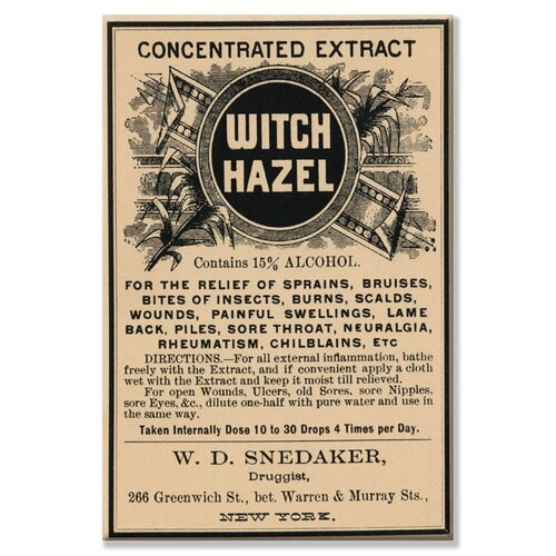 Buyenlarge Witch Hazel Textual Art on Canvas
