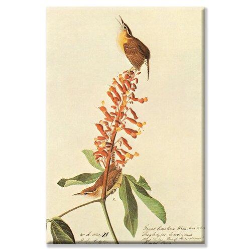Buyenlarge California Wren Graphic Art on Canvas