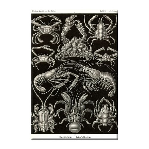 Buyenlarge Crustaceans Graphic Art on Canvas