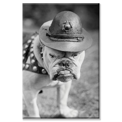 'Marine Corps Mascot Looks Like the Average Drill Instructor' Photographic Print on Canvas