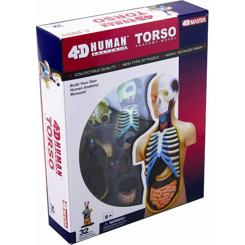 4D Human Anatomy - Torso Model