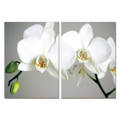 BZB Goods Pure Love White Orchids Modern 2 Piece Photographic Print