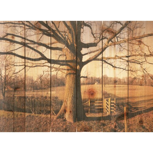 Gizaun Art Big Oak Photographic Print