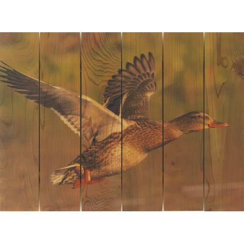 Gizaun Art Majestic Mallard Photographic Print