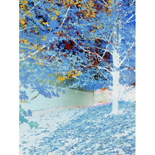 Carlyle Fine Art Nature Falling by Jordan Carlyle Graphic Art