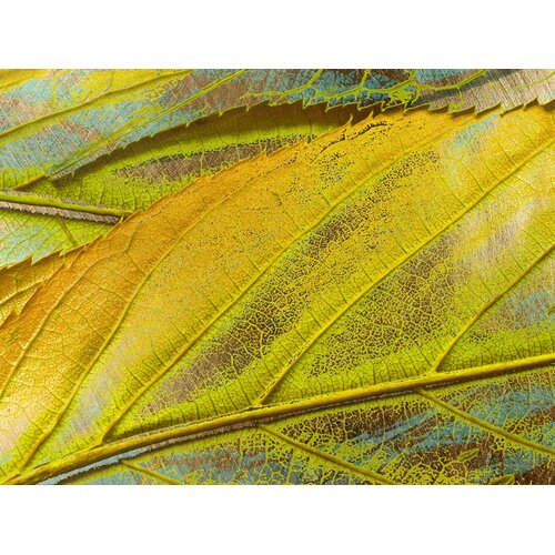 Carlyle Fine Art Nature Yellow Dust by Jordan Carlyle Graphic Art