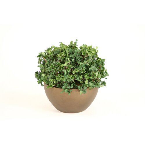 Distinctive Designs Silk Boxwood Floor Plant in Pot