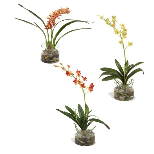 Distinctive Designs Assorted Silk Orchid Plants in Glass Cylinder