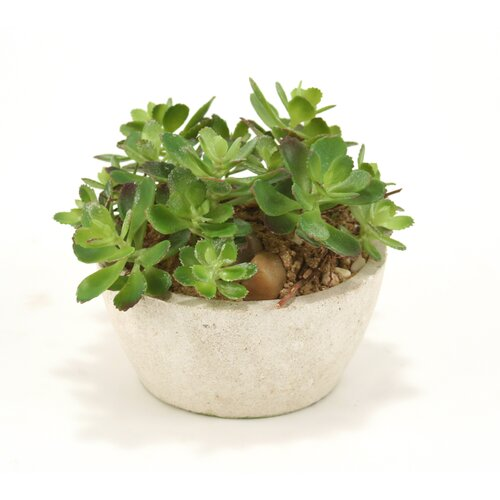 Distinctive Designs Silk Assorted Succulent Garden with Sand Floor Plant in Pot