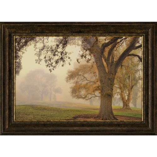 Ashton Wall Décor LLC Oak Grove Framed Photographic Print
