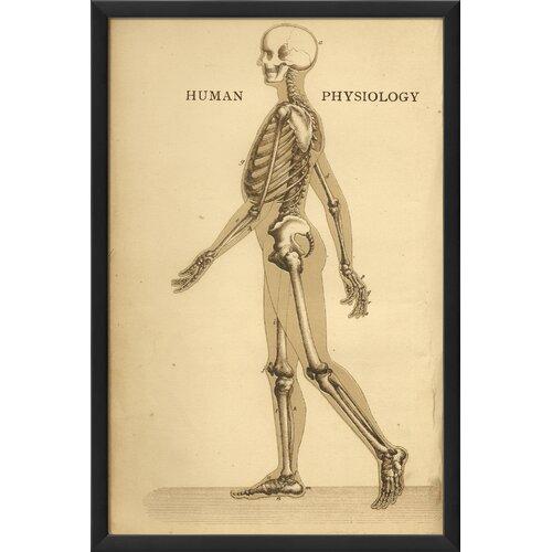 Blueprint Artwork Physiology Skeleton Framed Graphic Art
