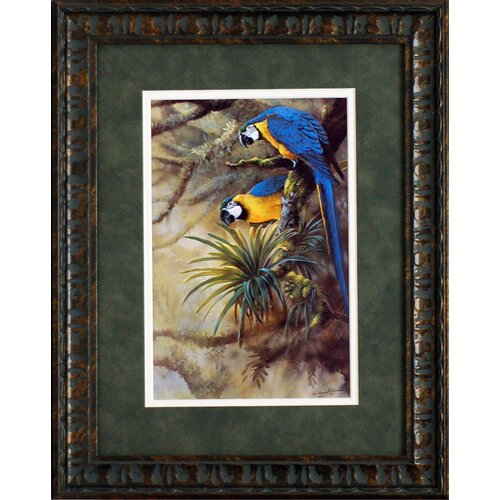 Artistic Reflections Blue and Gold Macaws Framed Painting Print