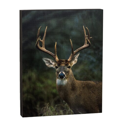 Summit Big Buck Wall Art