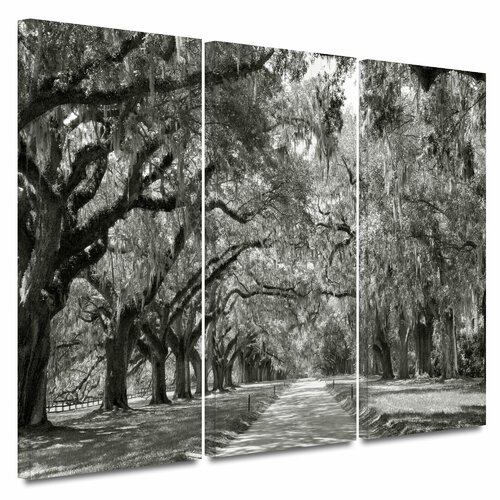 'Live Oak Avenue' by Steve Ainsworth 3 Piece Gallery-Wrapped Canvas Art Set
