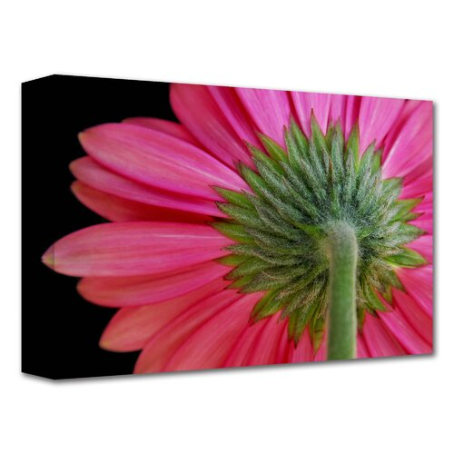 'Shy Flower' by Dan Holm Graphic Art Canvas
