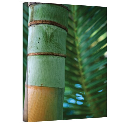Art Wall ''Bamboo and Fern'' by Kathy Yates Photographic Print on Canvas