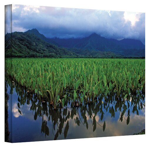 Art Wall ''Kauai Taro Field'' by Kathy Yates Print on Canvas