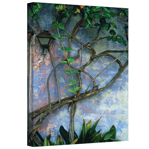''Vine and Wall'' by Kathy Yates Photographic Print on Canvas