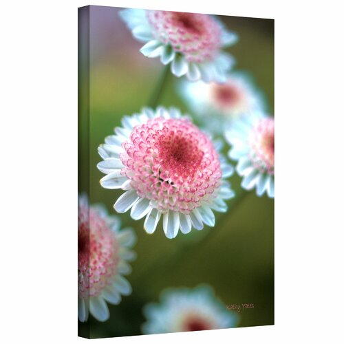 'Pincushion Flowers' by Kathy Yates Photographic Print on Canvas
