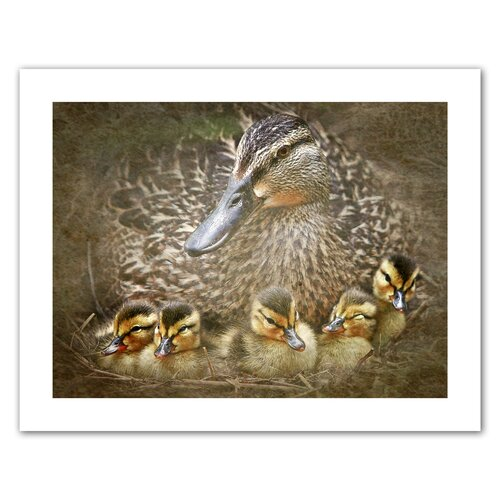 'Baby Ducks' by David Liam Kyle Graphic Art Canvas