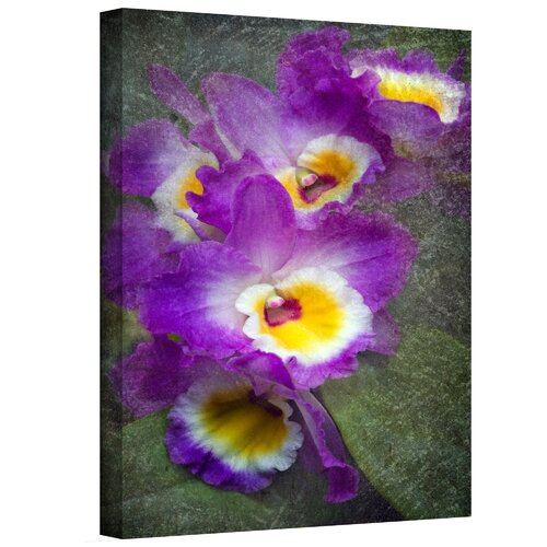 Art Wall 'Irises' by David Liam Kyle Photographic Print on Canvas