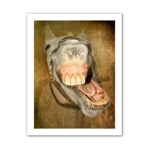 'Laughing Horse' by David Liam Kyle Photographic Print on Canvas