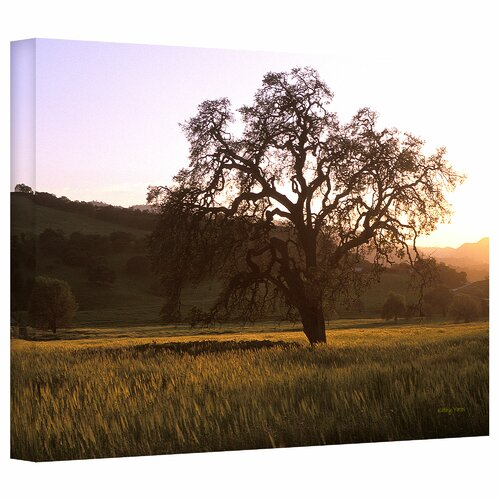 Art Wall 'Golden Hour' by Kathy Yates Photographic Print on Canvas