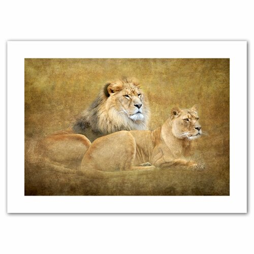 Art Wall 'Lions' by David Liam Kyle Photographic Print on Canvas