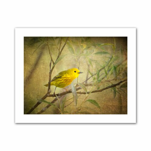 'Bird on Branch' by David Liam Kyle Photographic Print on Canvas