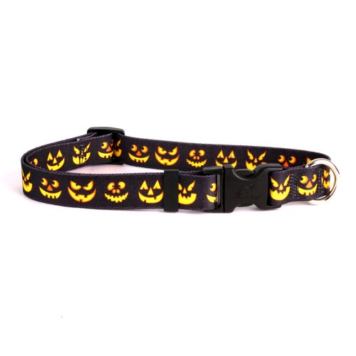 Yellow Dog Design Jack O'Lantern Standard Collar
