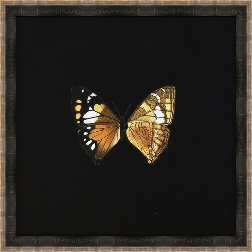 Butterflies VI Framed Art in Black