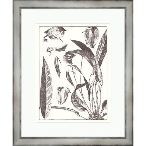 Melissa Van Hise Gray Flora on White ll Framed Graphic Art