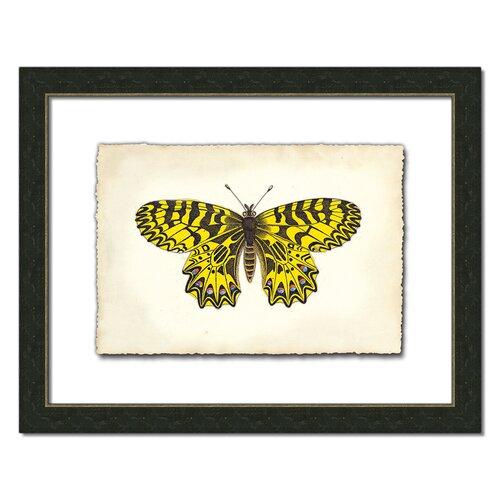 Butterfly I Framed Graphic Art