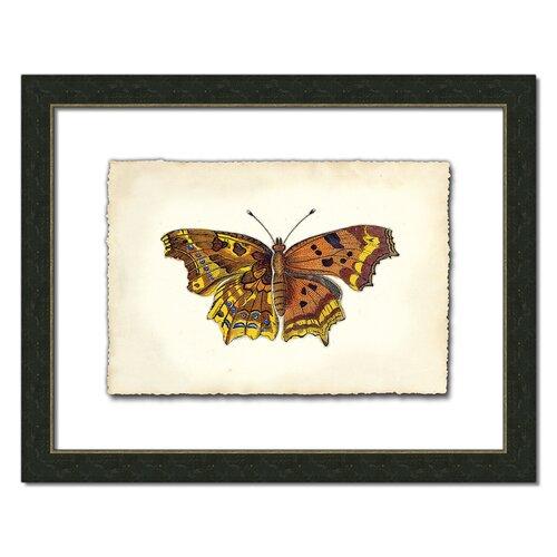 Butterfly Vl Framed Graphic Art